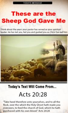 9796 - These are the sheep God gave me